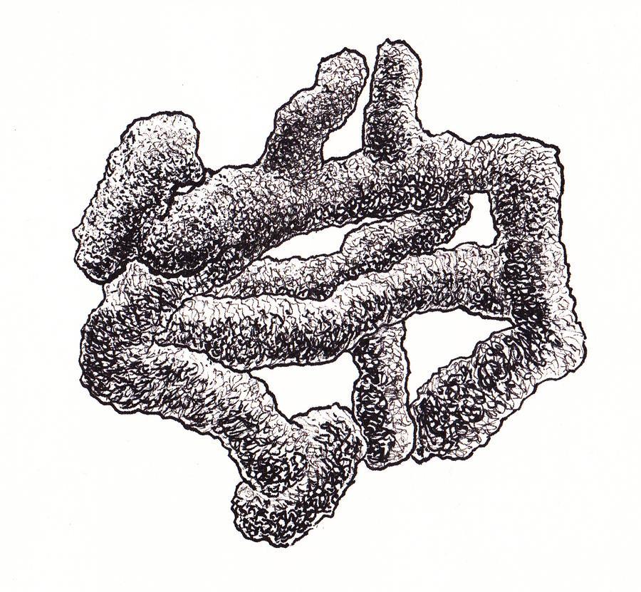 Fungiform by SatchelMarr