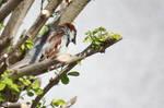 Bird In Tree 1 by hyperweasel