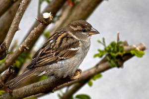 Bird In Tree 2 by hyperweasel