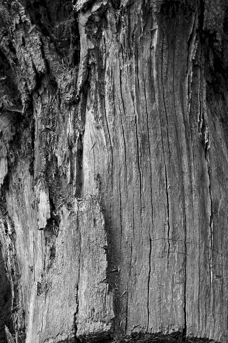 Wood by hyperweasel