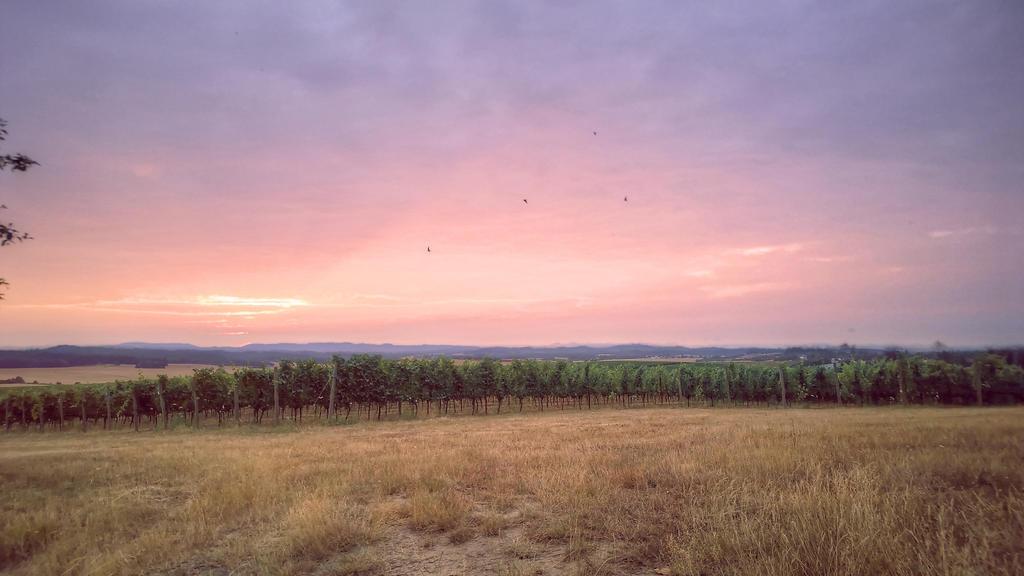 Sunset over Grape Vines by princesnoopy