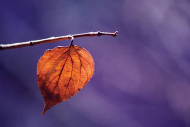 Leaf by ImNOTArtistic