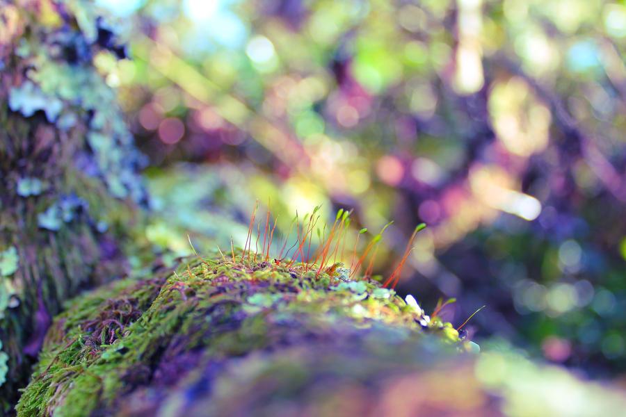 moss promenade by Aijoku