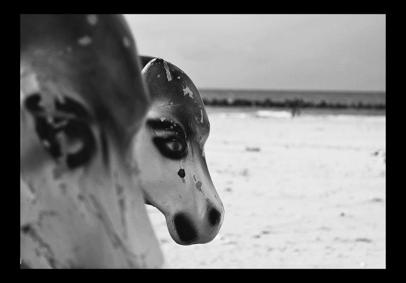 wild horses by Aijoku