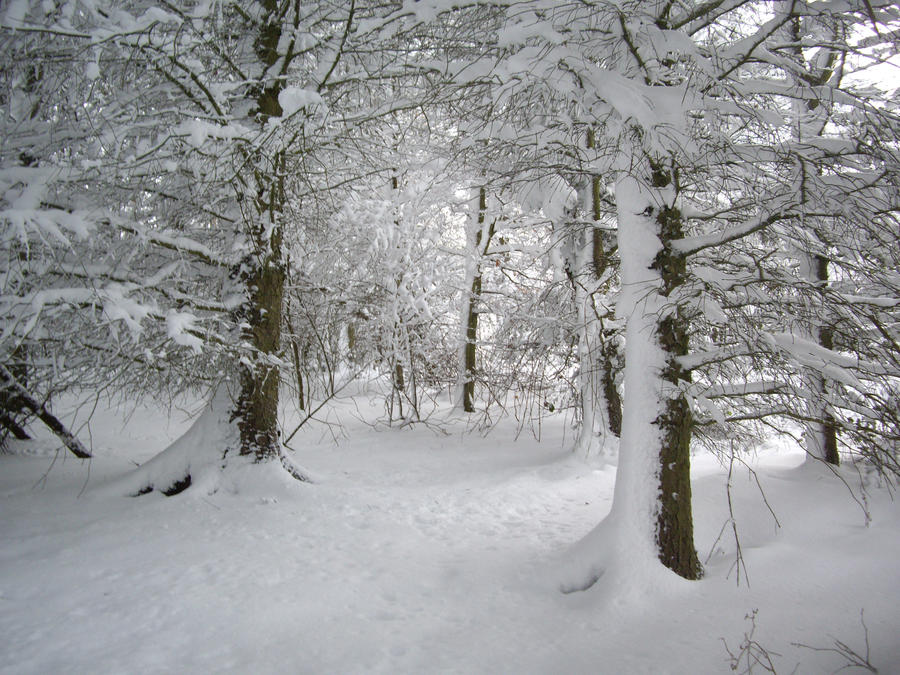 winter woodland stock by HumbleBeez