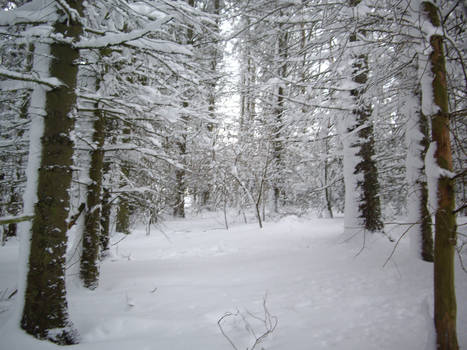 winter forest stock 3