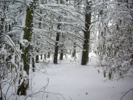 winter forest stock 4