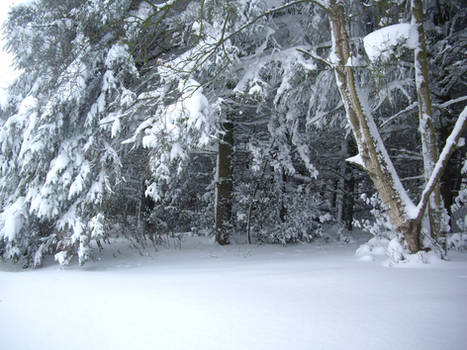 winter forest stock 5