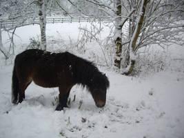horse winter stock