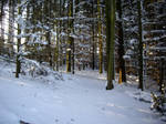 winter forest stock 7