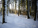 winter forest stock 10