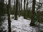 winter forest stock 1