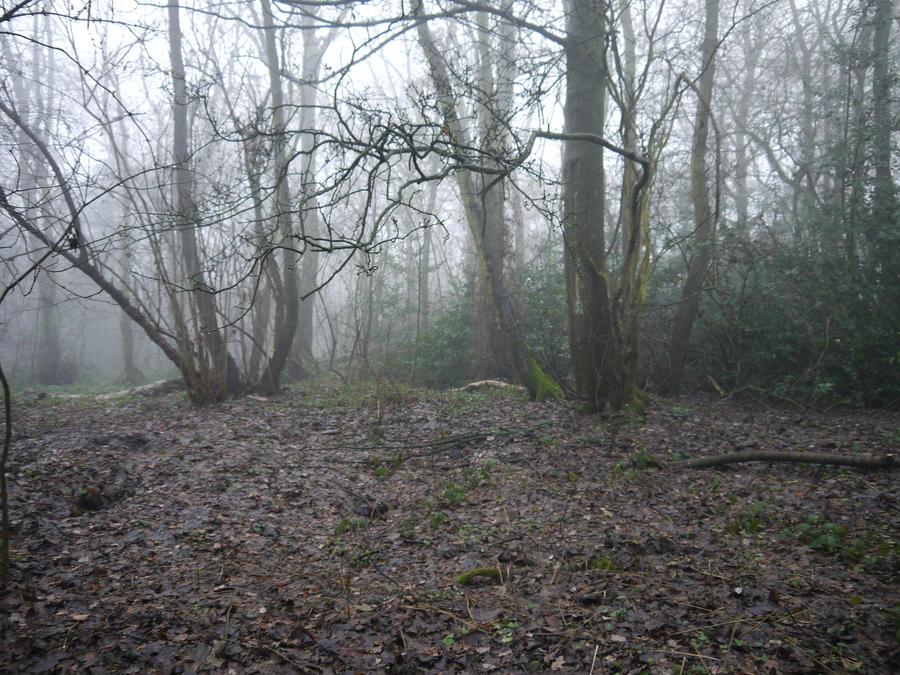 dark forest background stock