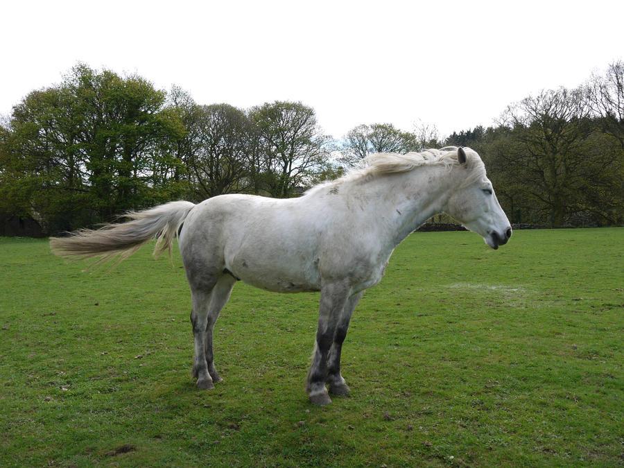 white horse stock 31
