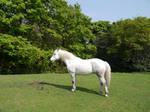 white horse stock 35