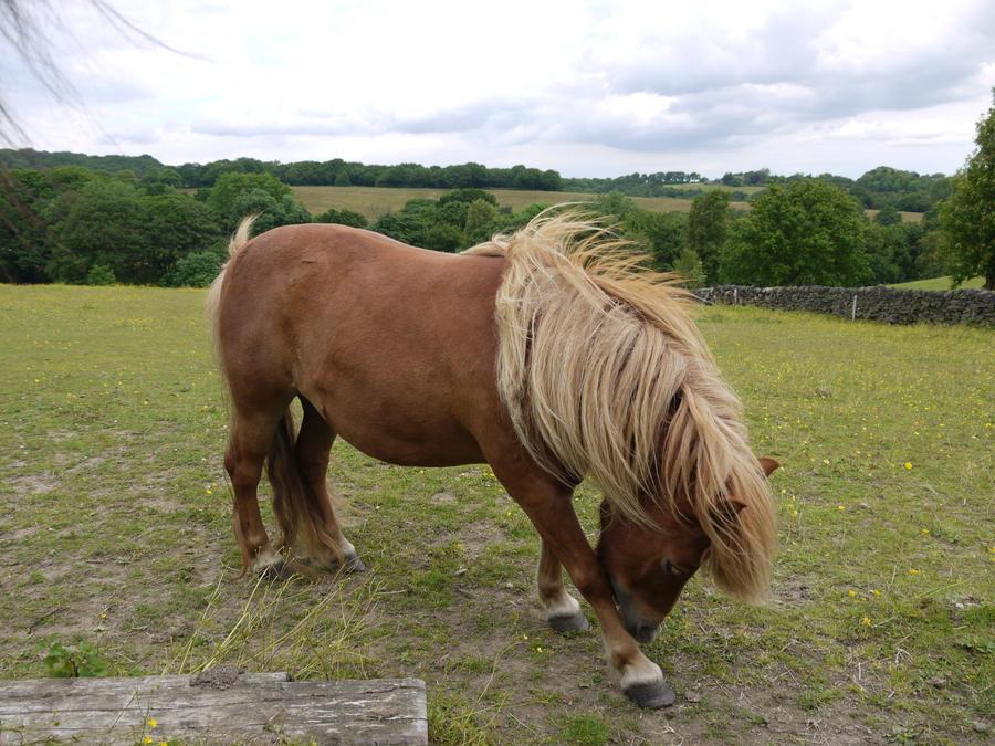 palomino pony stock 1 by HumbleBeez