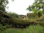 Fallen tree stock 1
