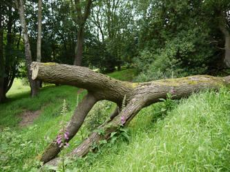 Fallen tree stock 2