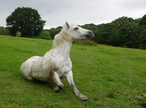 white horse stock 52