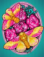 Rosy Maple Moth by RetkiKosmos