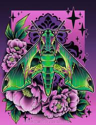 Pandora Sphynx Moth by RetkiKosmos