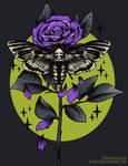 Death Hawk Moth and Rose