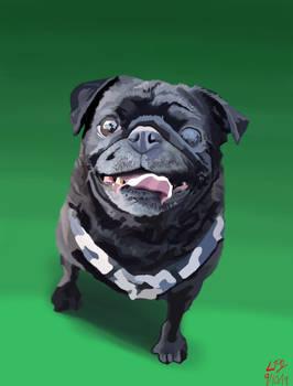 Pug Commission
