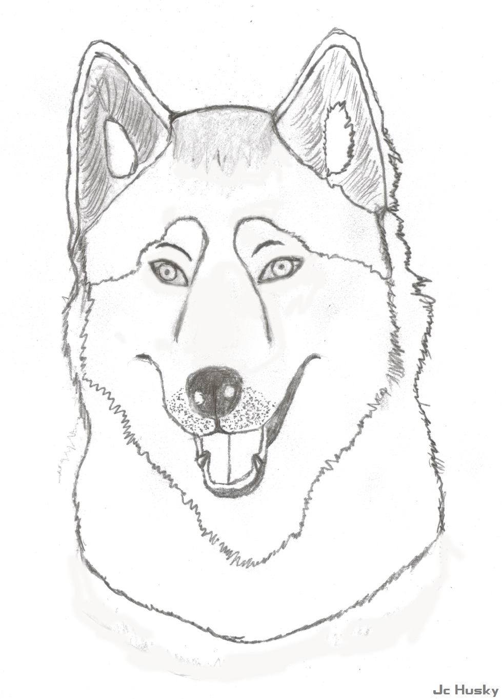 Husky sketch by jchusky26 on deviantart for Husky puppy coloring pages