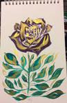 Traditional - Split Gold Rose