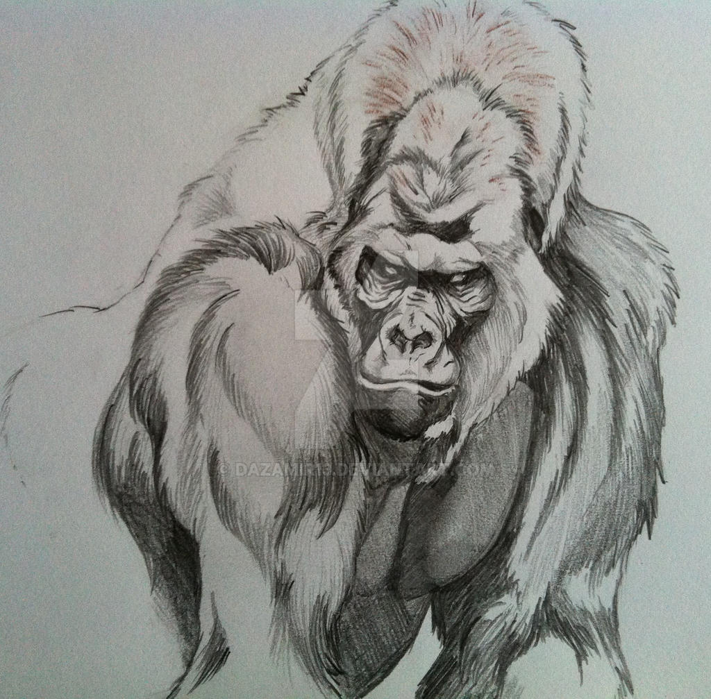 Uncategorized Gorilla Drawings silverback gorilla by dazamir13 on deviantart dazamir13