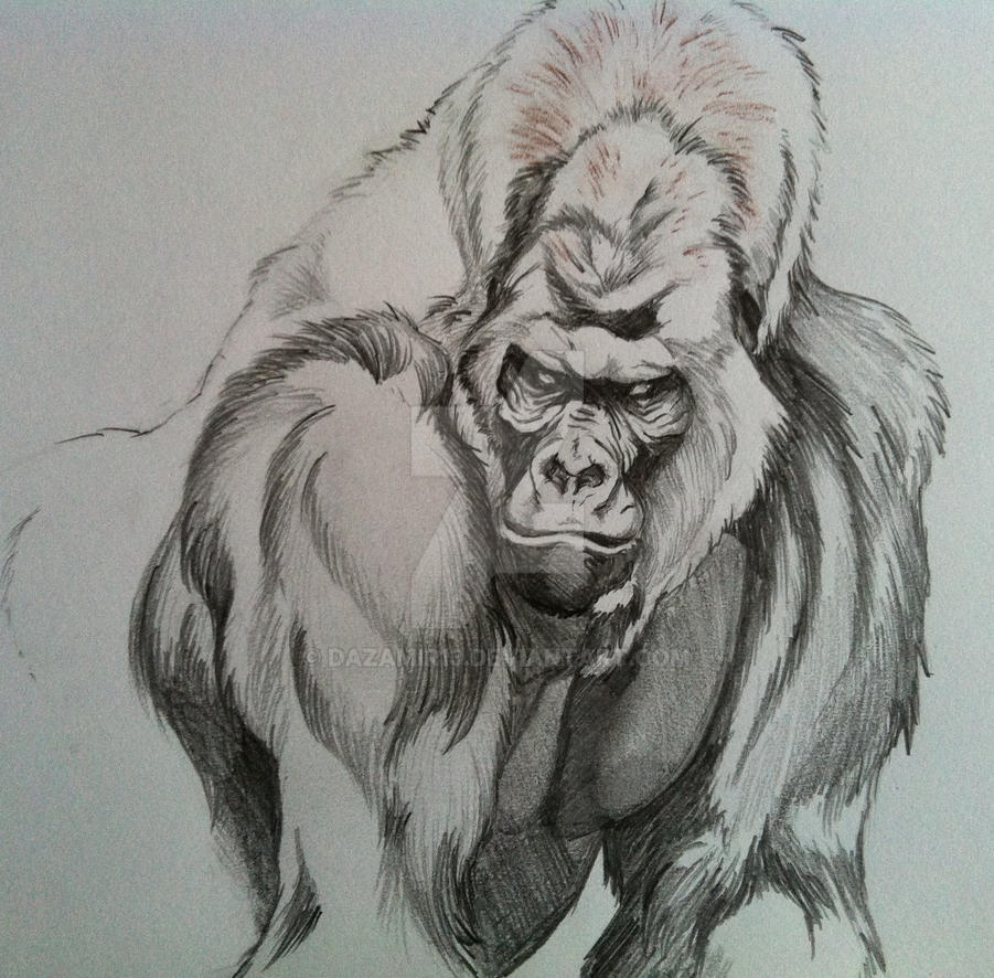 silverback gorilla by DAZAMIR13 on DeviantArt - photo#12
