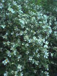 rapunzell - stock flower 02 by rapunzell-stock