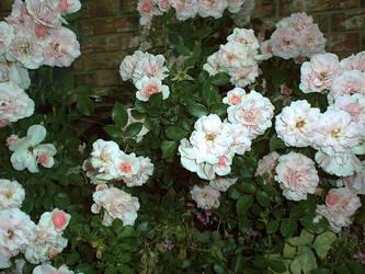 rapunzell - stock flower 03 by rapunzell-stock