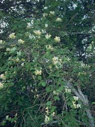 rapunzell - stock flower 04 by rapunzell-stock