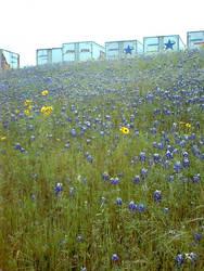 rapunzell - stock flower 06 by rapunzell-stock