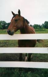 rapunzell - stock horse by rapunzell-stock