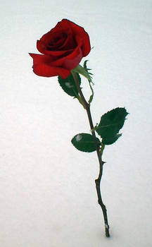 rapunzell - Snow Rose 5