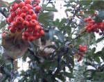 Berries - Two
