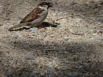 a little bird eating