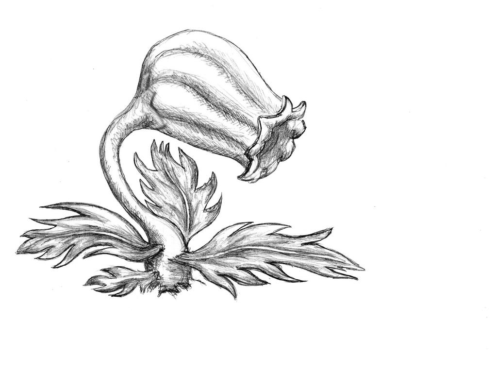 Traditional Flower Line Drawing : Nasty flower 1 by billie bonce on deviantart