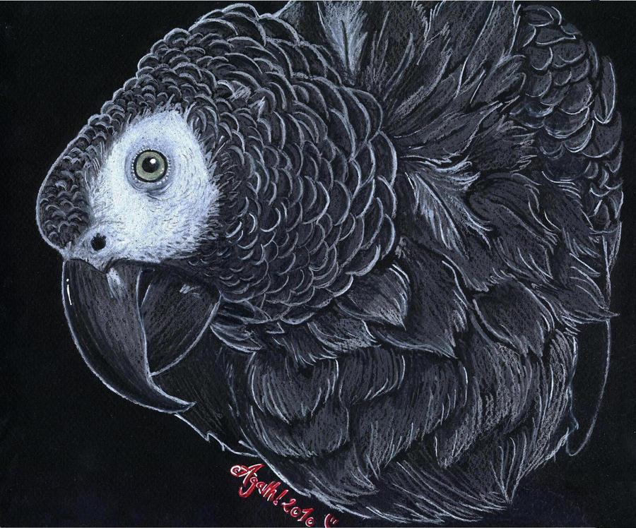 Shango by Agatha-Macpie