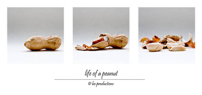 life of a peanut by boproductions