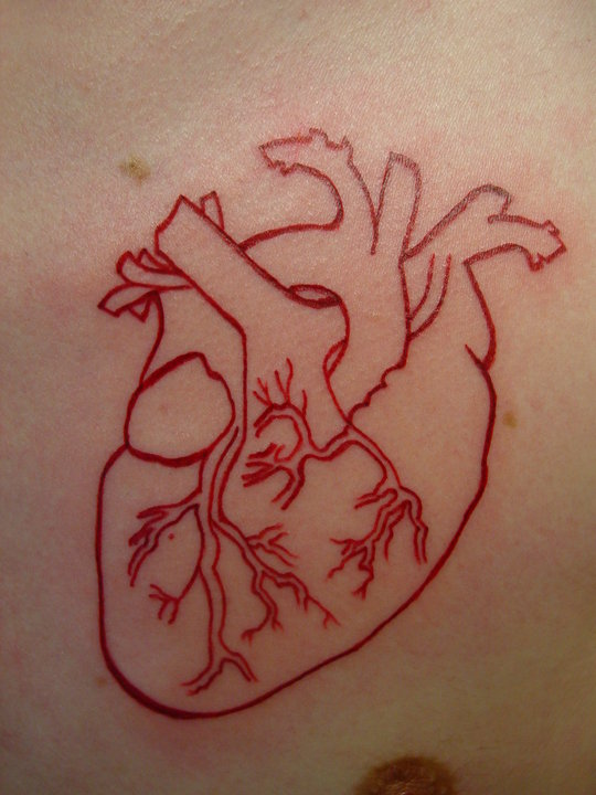 Anatomical Heart Outline Avrs  Anatomical Heart Outline Tattoo