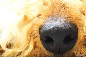 Favorite Big Nose by Spid4