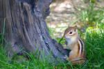 Little Chipmunk by Spid4
