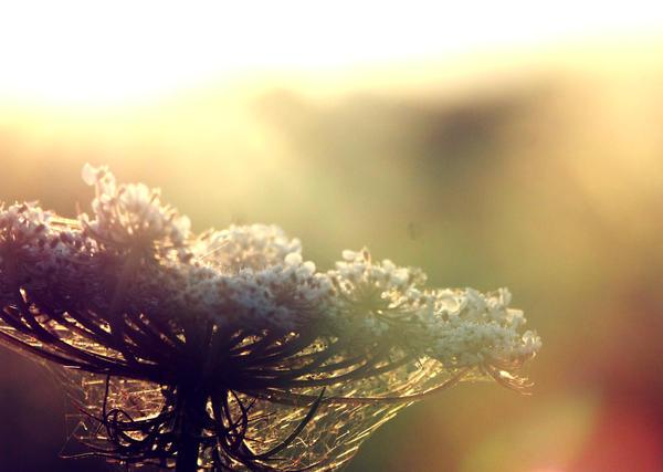 When the sun rises by sweetrevenger
