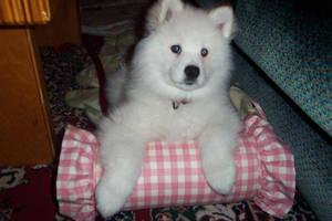 Puppyness heaven by Mandycatz55