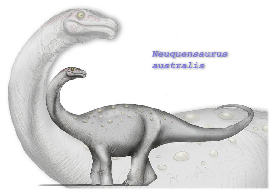 Neuquensaurus australis by maniraptora
