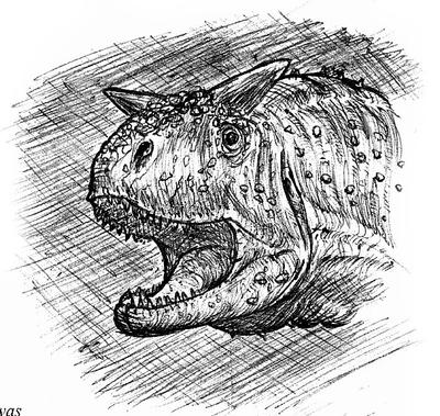 Carnotaur sketch by maniraptora