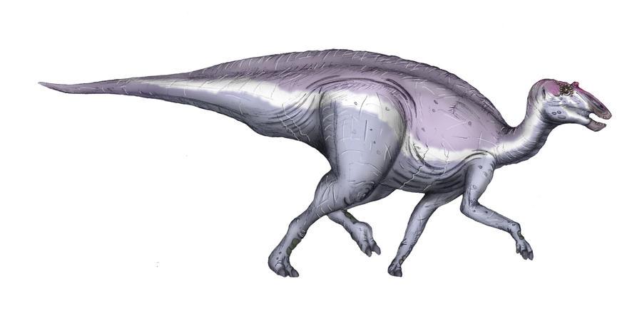 Secernosaurus koerneri by maniraptora